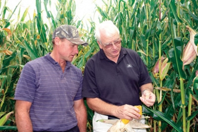 Maize silage - integral part of wet farm's management strategy