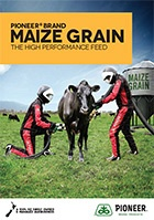 Maize Grain – The High Performance Feed