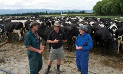Managing pasture and maximising production using maize silage
