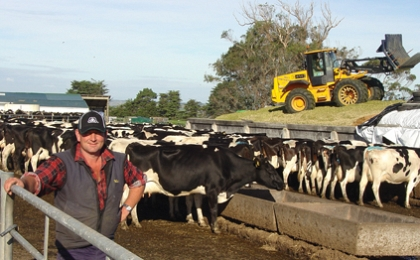 Maize silage yields more milk