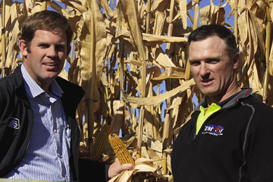 Maize spreads workload and utilises equipment