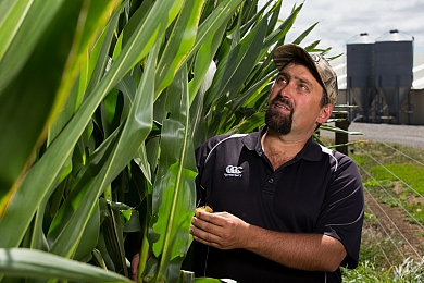 Northland winners feed Maize Silage all year round