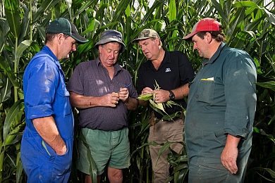 Twenty years of maize silage success