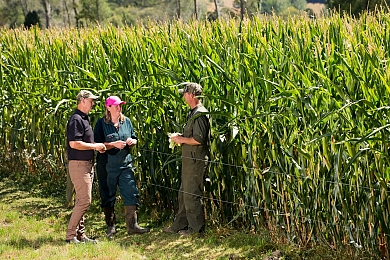 Year-round maize use, all-round improvements